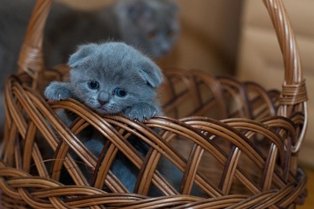 Pet Loss Kitten