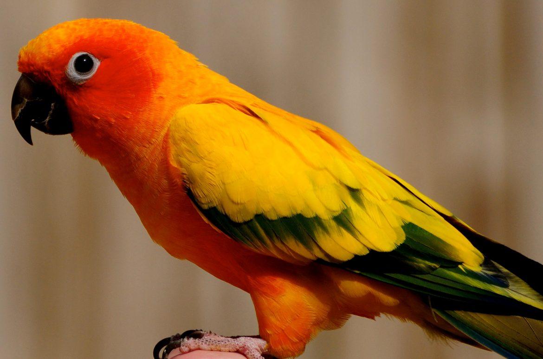 Pet Loss Bird
